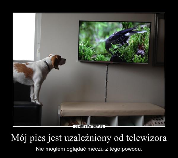 Mój pies jest uzależniony od telewizora – Nie mogłem oglądać meczu z tego powodu.