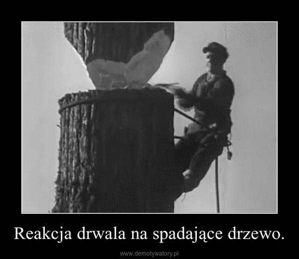 Reakcja drwala na spadające drzewo. –