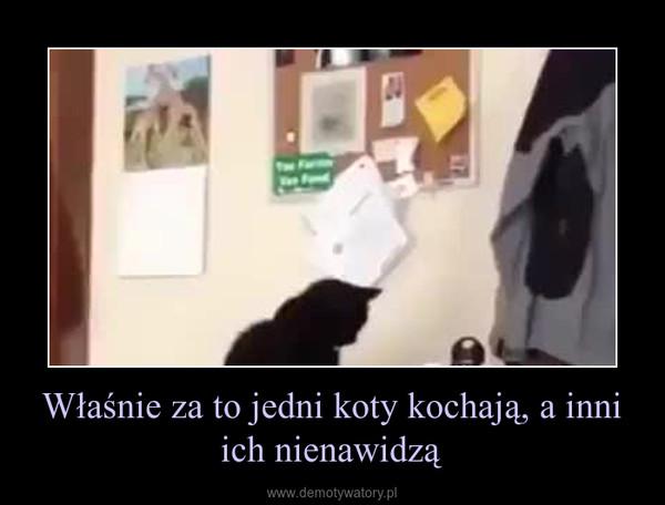Właśnie za to jedni koty kochają, a inni ich nienawidzą –