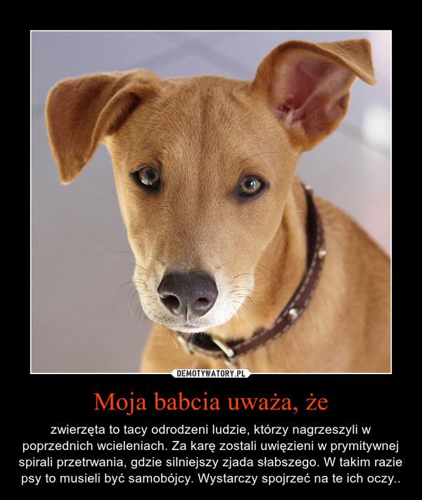 Moja babcia uważa, że – zwierzęta to tacy odrodzeni ludzie, którzy nagrzeszyli w poprzednich wcieleniach. Za karę zostali uwięzieni w prymitywnej spirali przetrwania, gdzie silniejszy zjada słabszego. W takim razie psy to musieli być samobójcy. Wystarczy spojrzeć na te ich oczy..