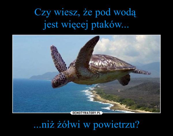 ...niż żółwi w powietrzu? –