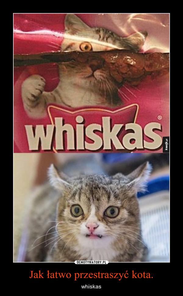 Jak łatwo przestraszyć kota. – whiskas