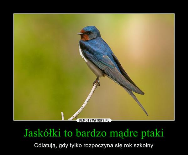 Jaskółki to bardzo mądre ptaki – Odlatują, gdy tylko rozpoczyna się rok szkolny