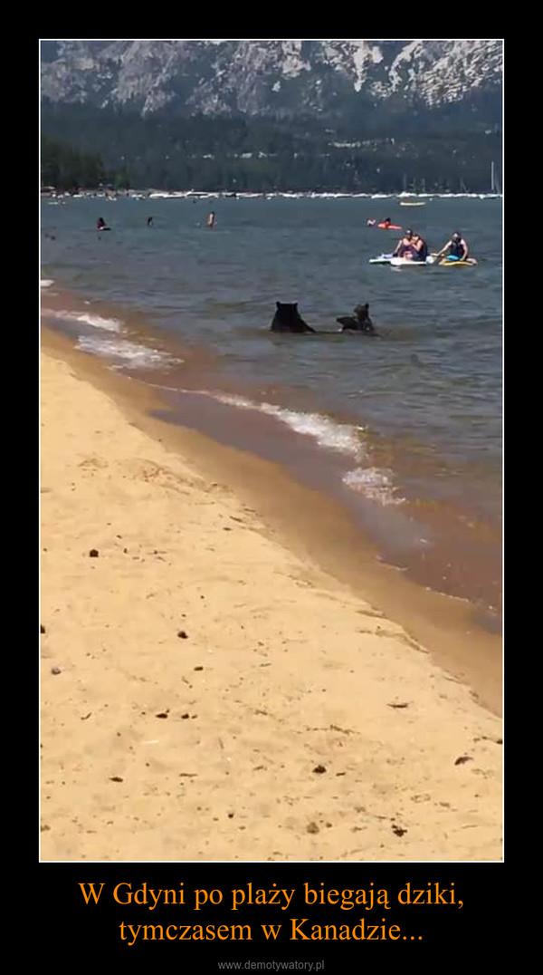 W Gdyni po plaży biegają dziki, tymczasem w Kanadzie... –