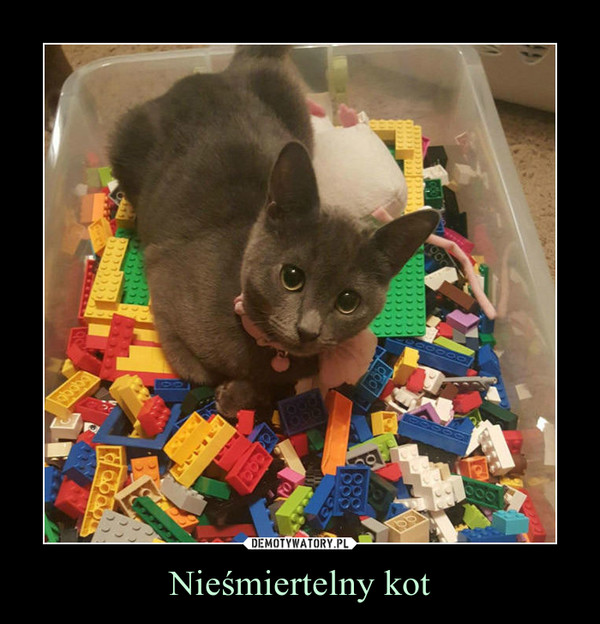 Nieśmiertelny kot –