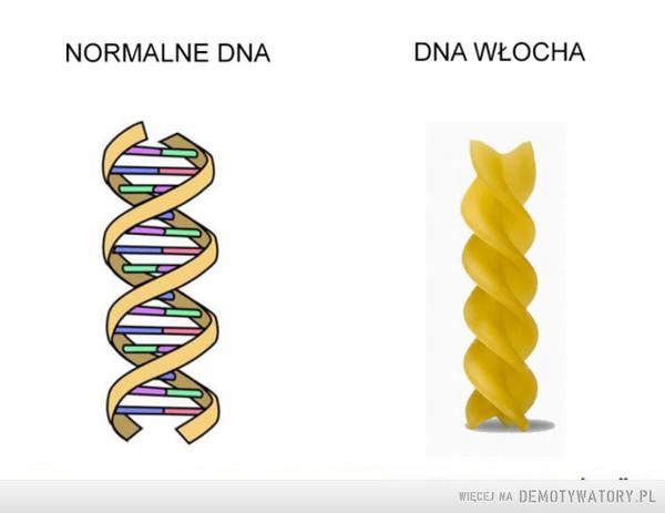 DNA –