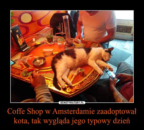 Coffe Shop w Amsterdamie zaadoptował kota, tak wygląda jego typowy dzień –