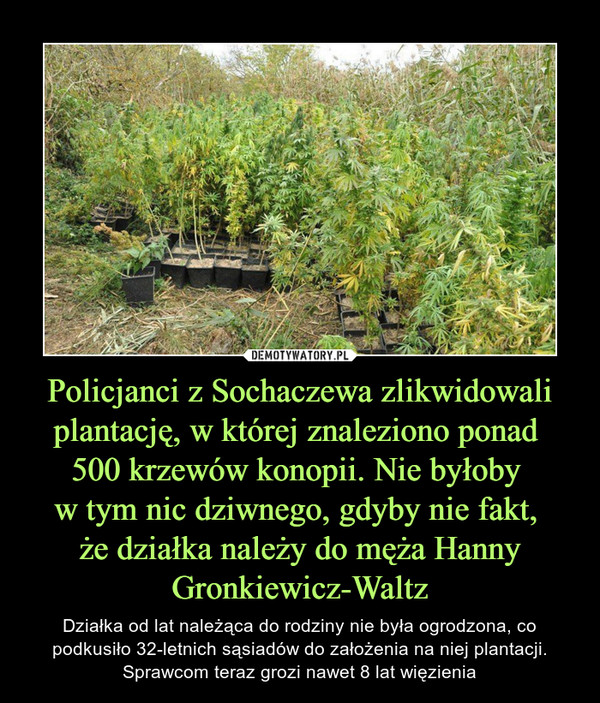 Policjanci z Sochaczewa zlikwidowali plantację, w której znaleziono ponad 500 krzewów konopii. Nie byłoby w tym nic dziwnego, gdyby nie fakt, że działka należy do męża Hanny Gronkiewicz-Waltz – Działka od lat należąca do rodziny nie była ogrodzona, co podkusiło 32-letnich sąsiadów do założenia na niej plantacji. Sprawcom teraz grozi nawet 8 lat więzienia