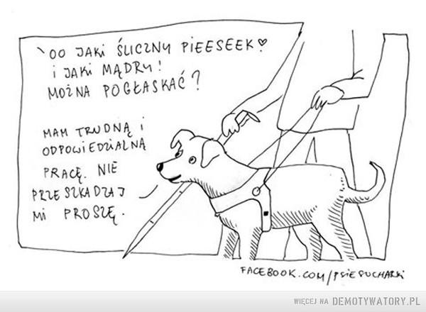 Nie zaczepiaj psa przewodnika –
