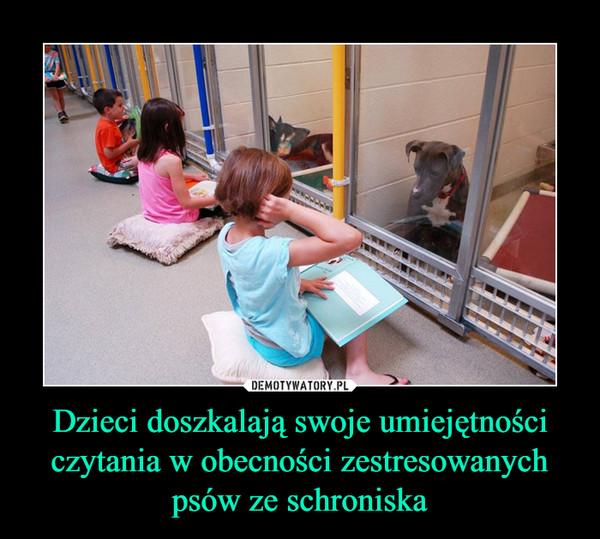 Dzieci doszkalają swoje umiejętności czytania w obecności zestresowanych psów ze schroniska –