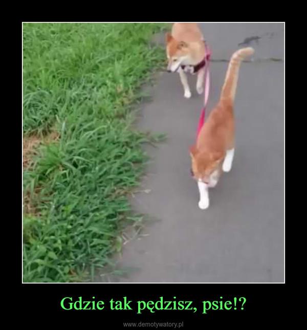 Gdzie tak pędzisz, psie!? –