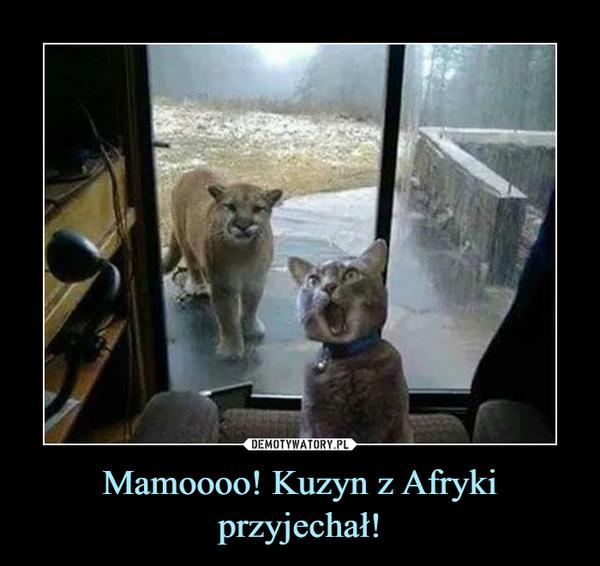 Mamoooo! Kuzyn z Afryki przyjechał! –