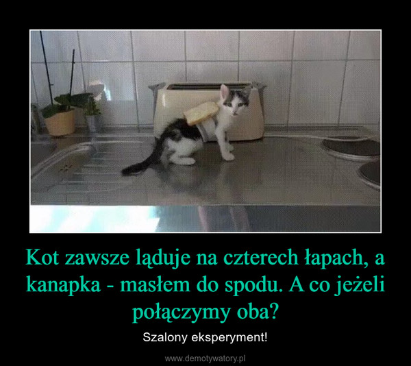 Kot zawsze ląduje na czterech łapach, a kanapka - masłem do spodu. A co jeżeli połączymy oba? – Szalony eksperyment!