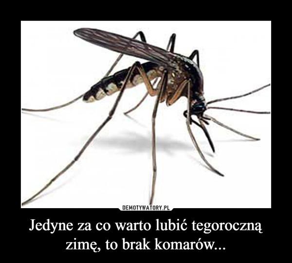 Jedyne za co warto lubić tegoroczną zimę, to brak komarów... –