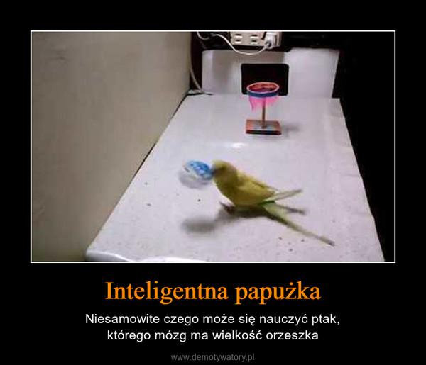 Inteligentna papużka – Niesamowite czego może się nauczyć ptak,którego mózg ma wielkość orzeszka