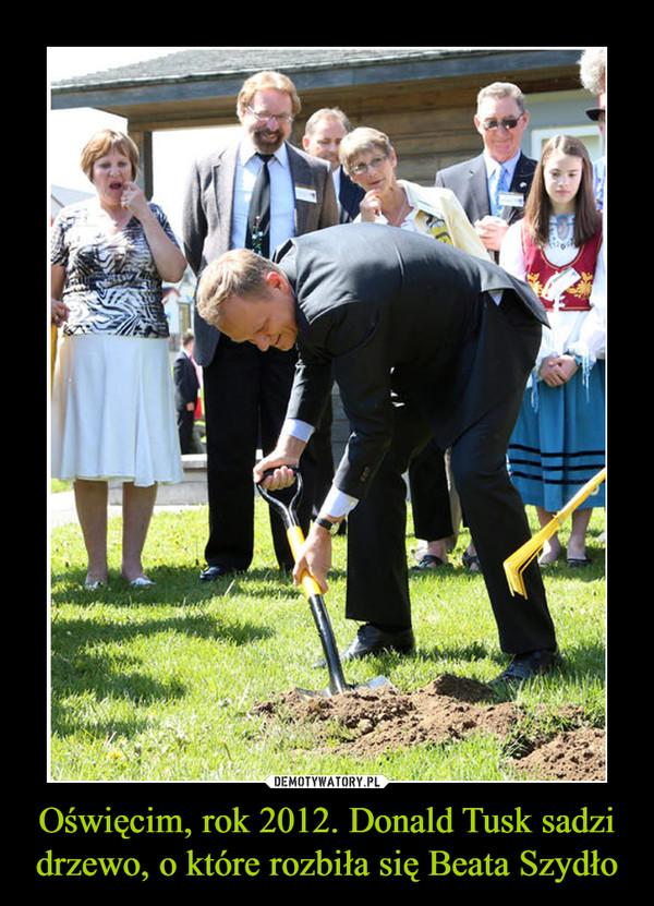 Oświęcim, rok 2012. Donald Tusk sadzi drzewo, o które rozbiła się Beata Szydło –