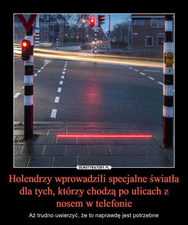 Holendrzy wprowadzili specjalne światła dla tych, którzy chodzą po ulicach z nosem w telefonie – Aż trudno uwierzyć, że to naprawdę jest potrzebne