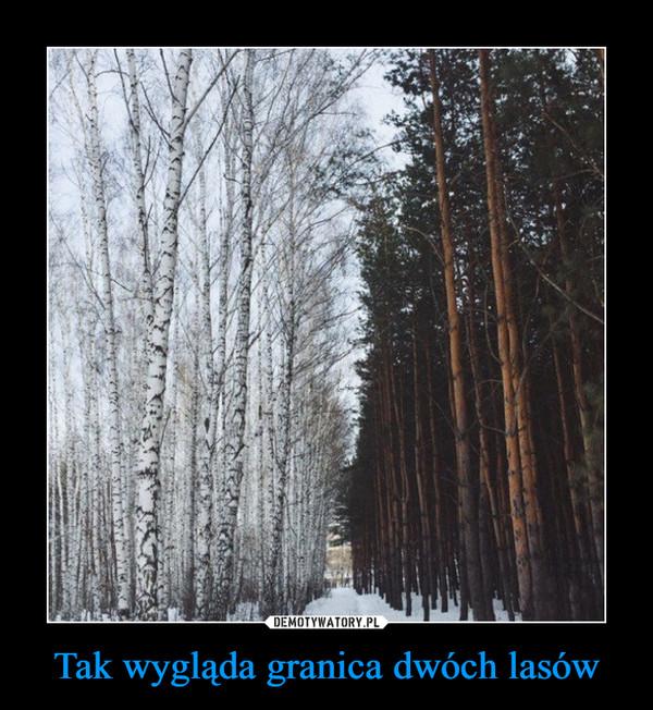 Tak wygląda granica dwóch lasów –