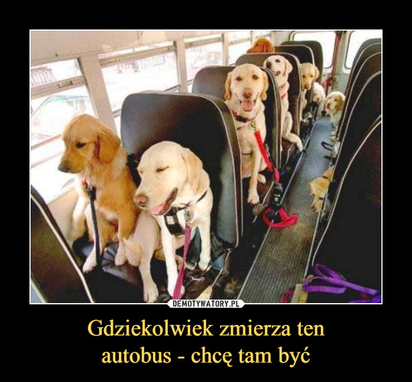 Gdziekolwiek zmierza tenautobus - chcę tam być –