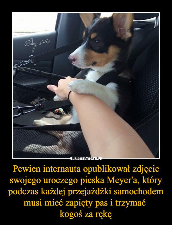 Pewien internauta opublikował zdjęcie swojego uroczego pieska Meyer'a, który podczas każdej przejażdżki samochodem musi mieć zapięty pas i trzymać kogoś za rękę –