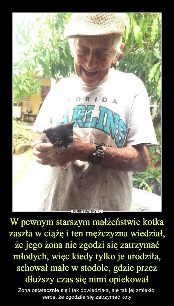 W pewnym starszym małżeństwie kotka zaszła w ciążę i ten mężczyzna wiedział, że jego żona nie zgodzi się zatrzymać młodych, więc kiedy tylko je urodziła, schował małe w stodole, gdzie przez dłuższy czas się nimi opiekował – Żona ostatecznie się i tak dowiedziała, ale tak jej zmiękło serce, że zgodziła się zatrzymać koty