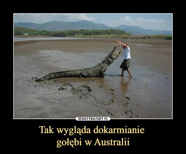 Tak wygląda dokarmianie gołębi w Australii –