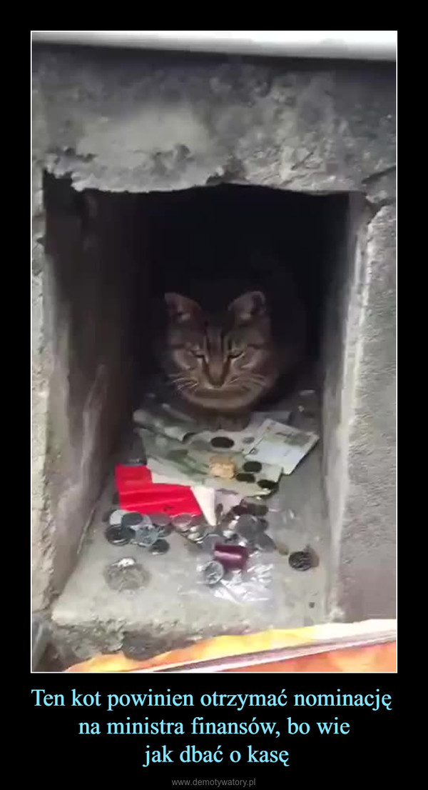 Ten kot powinien otrzymać nominację na ministra finansów, bo wie jak dbać o kasę –
