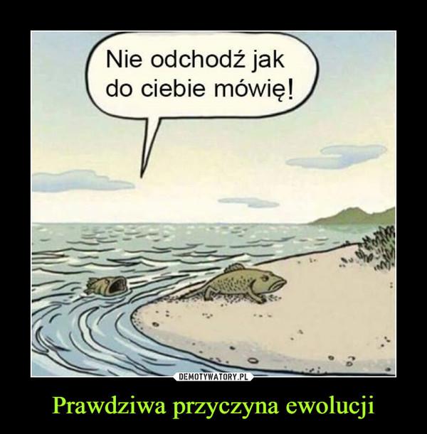 Znalezione obrazy dla zapytania ewolucja ryba słowa
