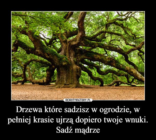 Drzewa które sadzisz w ogrodzie, w pełniej krasie ujrzą dopiero twoje wnuki. Sadź mądrze –