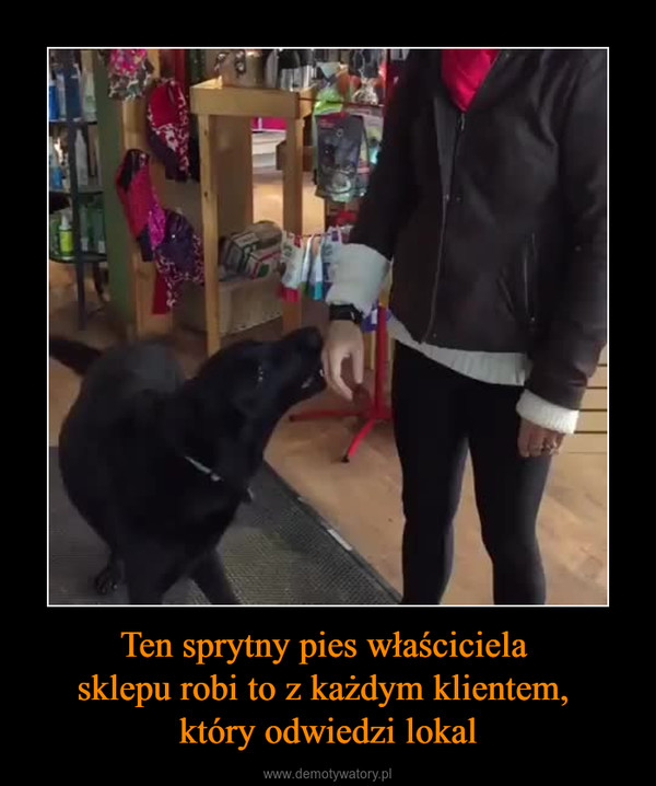 Ten sprytny pies właściciela sklepu robi to z każdym klientem, który odwiedzi lokal –