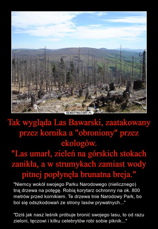 """Tak wygląda Las Bawarski, zaatakowany przez kornika a """"obroniony"""" przez ekologów.""""Las umarł, zieleń na górskich stokach zanikła, a w strumykach zamiast wody pitnej popłynęła brunatna breja."""" – """"Niemcy wokół swojego Parku Narodowego (nielicznego) tną drzewa na potęgę. Robią korytarz ochronny na ok. 800 metrów przed kornikiem. Te drzewa tnie Narodowy Park, bo boi się odszkodowań ze strony lasów prywatnych...""""""""Dziś jak nasz leśnik próbuje bronić swojego lasu, to od razu zieloni, tęczowi i kilku celebrytów robi sobie piknik..."""""""