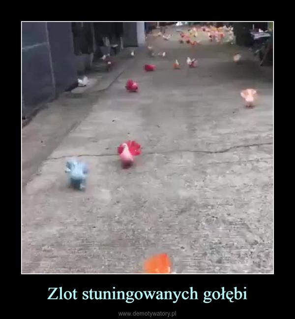 Zlot stuningowanych gołębi –