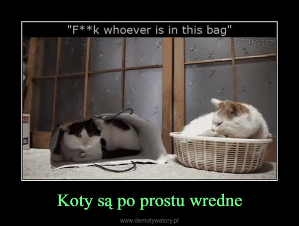 Koty są po prostu wredne –