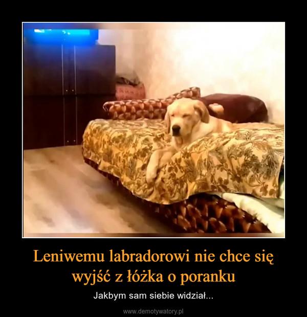 Leniwemu labradorowi nie chce się wyjść z łóżka o poranku – Jakbym sam siebie widział...