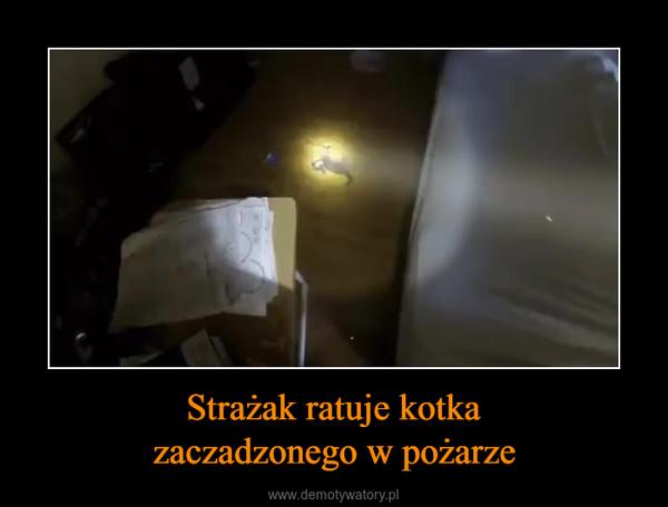 Strażak ratuje kotkazaczadzonego w pożarze –