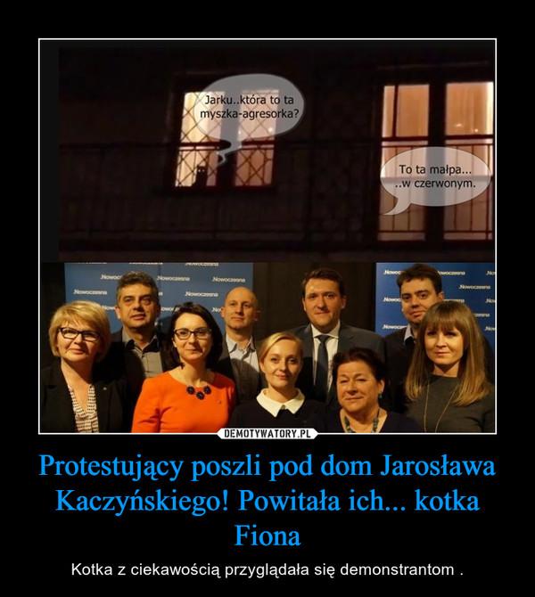 Protestujący poszli pod dom Jarosława Kaczyńskiego! Powitała ich... kotka Fiona – Kotka z ciekawością przyglądała się demonstrantom .