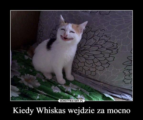 Kiedy Whiskas wejdzie za mocno –