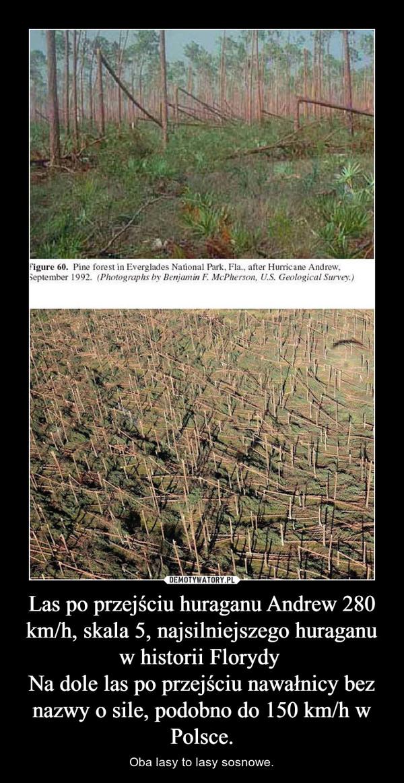 Las po przejściu huraganu Andrew 280 km/h, skala 5, najsilniejszego huraganu w historii Florydy Na dole las po przejściu nawałnicy bez nazwy o sile, podobno do 150 km/h w Polsce. – Oba lasy to lasy sosnowe.