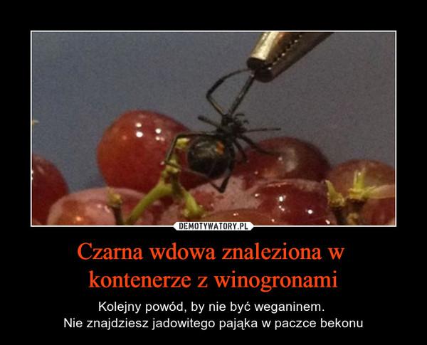 Czarna wdowa znaleziona w kontenerze z winogronami – Kolejny powód, by nie być weganinem. Nie znajdziesz jadowitego pająka w paczce bekonu