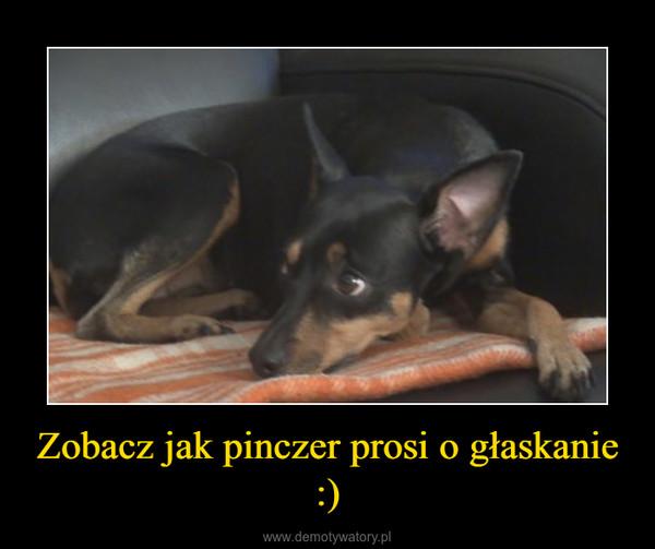 Zobacz jak pinczer prosi o głaskanie :) –