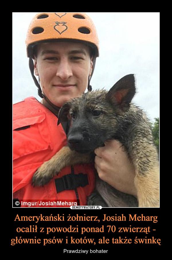 Amerykański żołnierz, Josiah Meharg ocalił z powodzi ponad 70 zwierząt - głównie psów i kotów, ale także świnkę – Prawdziwy bohater