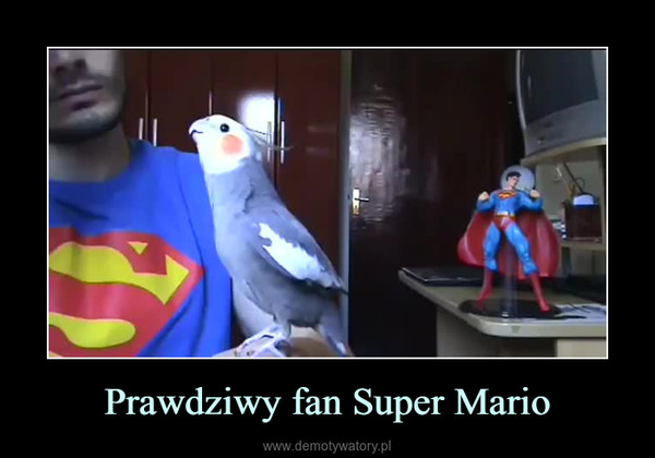 Prawdziwy fan Super Mario –