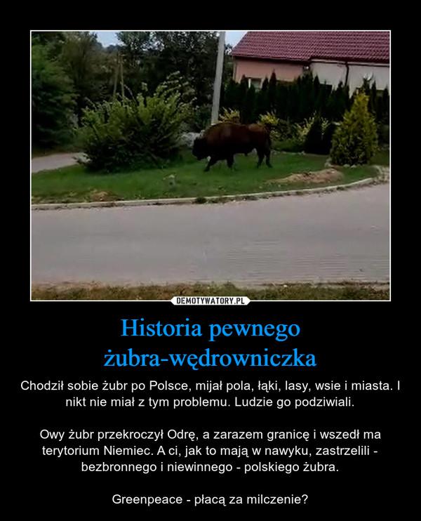 Historia pewnego żubra-wędrowniczka – Chodził sobie żubr po Polsce, mijał pola, łąki, lasy, wsie i miasta. I nikt nie miał z tym problemu. Ludzie go podziwiali.Owy żubr przekroczył Odrę, a zarazem granicę i wszedł ma terytorium Niemiec. A ci, jak to mają w nawyku, zastrzelili - bezbronnego i niewinnego - polskiego żubra.Greenpeace - płacą za milczenie?