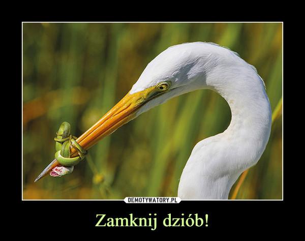 Zamknij dziób! –