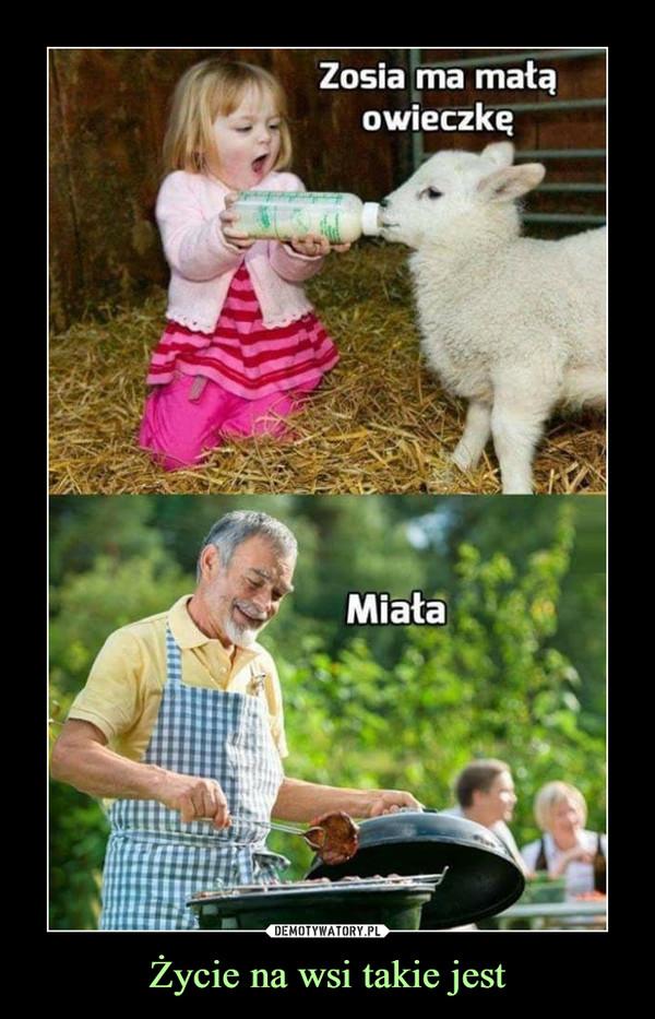 Życie na wsi takie jest –  Zosia ma małą owieczkęMiała
