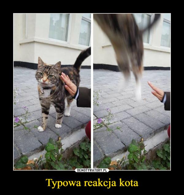 Typowa reakcja kota –