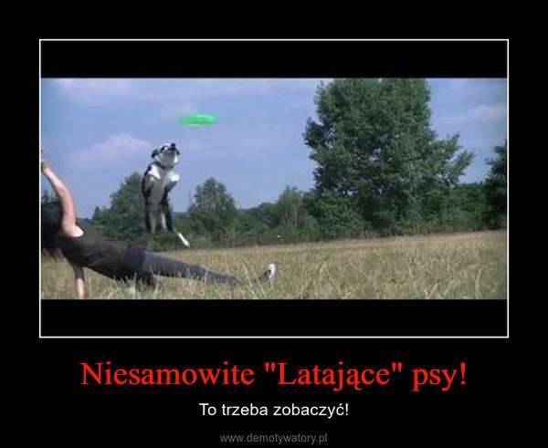 """Niesamowite """"Latające"""" psy! – To trzeba zobaczyć!"""