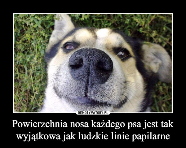 Powierzchnia nosa każdego psa jest tak wyjątkowa jak ludzkie linie papilarne –