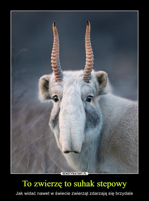 To zwierzę to suhak stepowy – Jak widać nawet w świecie zwierząt zdarzają się brzydale
