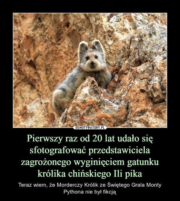 Pierwszy raz od 20 lat udało się sfotografować przedstawiciela zagrożonego wyginięciem gatunku królika chińskiego Ili pika – Teraz wiem, że Morderczy Królik ze Świętego Grala Monty Pythona nie był fikcją